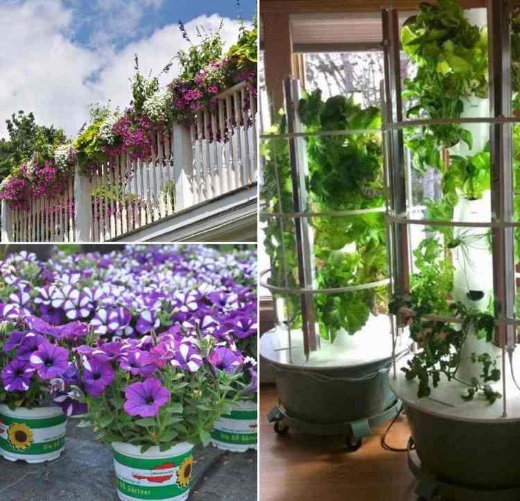 Balcony Vertical Garden Ideas Techniques Tips In India Gardening Tips