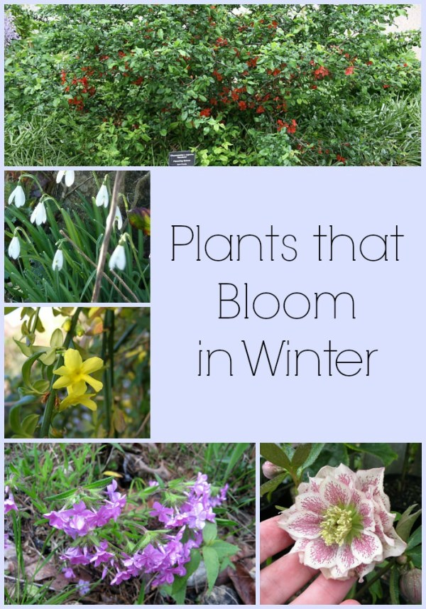 8 plants bloom in winter