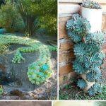 Creative Indoor And Outdoor Succulent Garden Ideas Gardening Viral