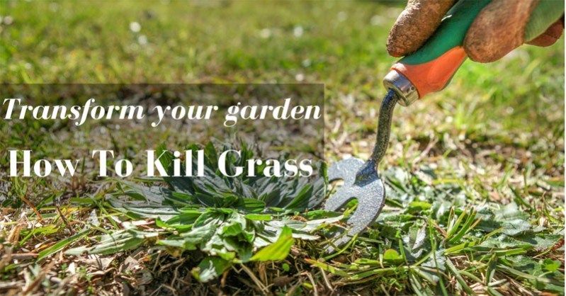 how to kill grass