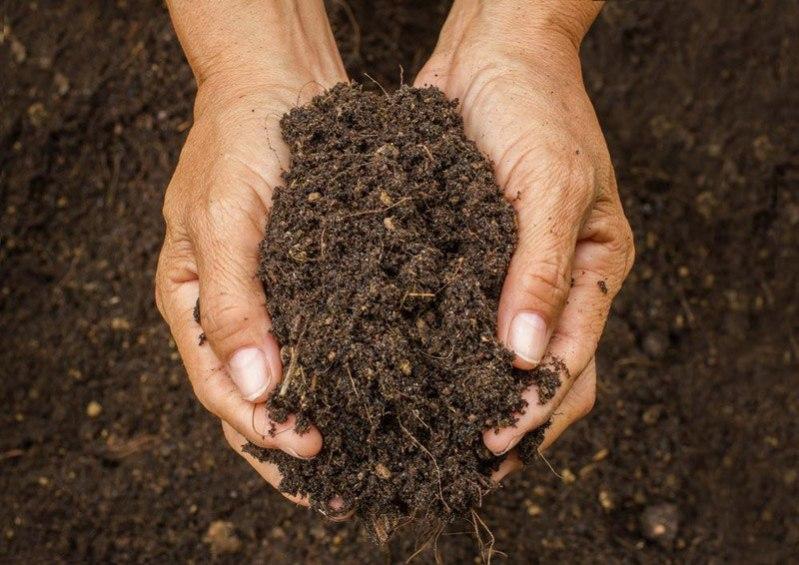 soil for spring onion