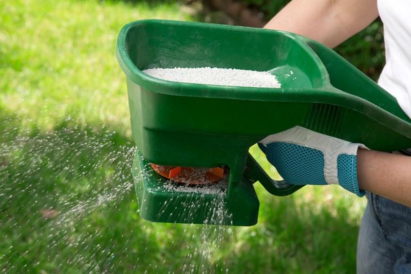 Manual fertilizing of the lawn in back yard