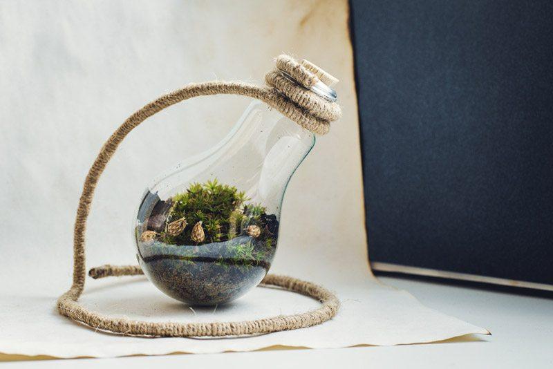 Homemade terrarium of bulbs
