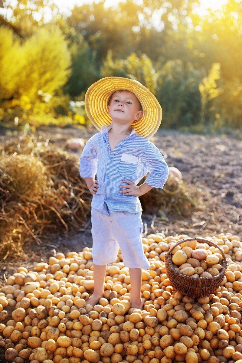 When to Harvest potato