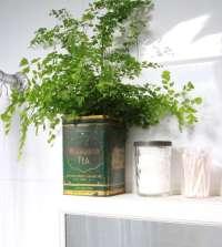 DIY: Maidenhair Fern for Bathroom Greenery - Gardenista