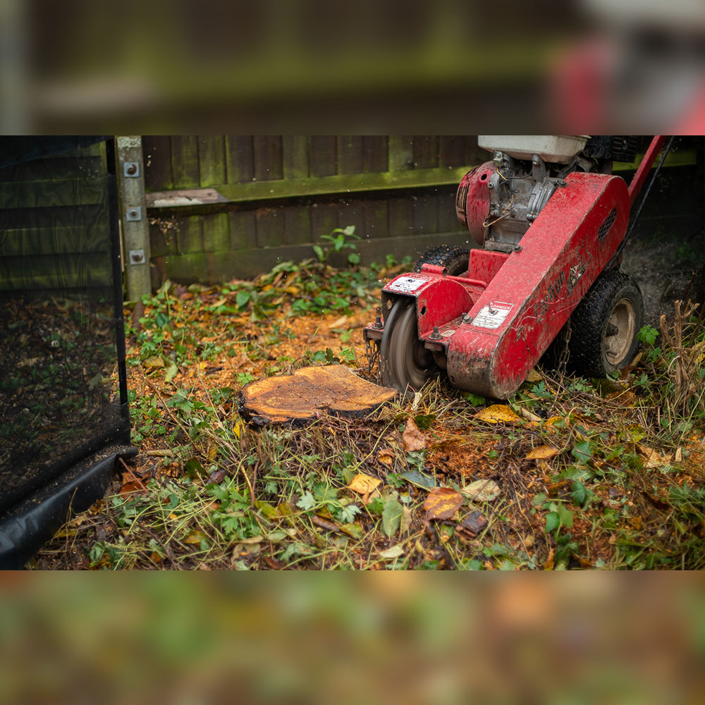 Tree Stump and root removal leighton Buzzard