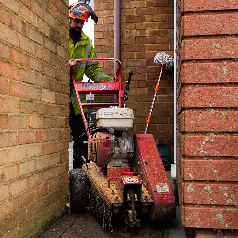 narrow access tree stump removal in Dunstable