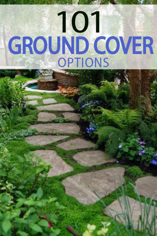 Did you know there were 101 options for ground cover? Here is the ultimate article covering them all.