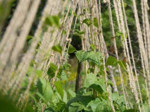 climbing-plant-395923