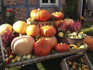 pumpkin fall decor 1