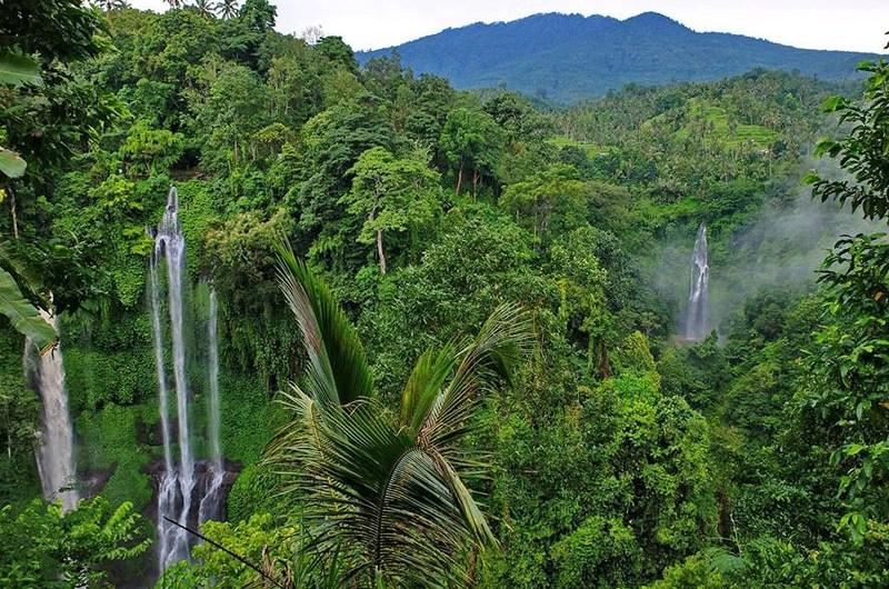 Тропические горные леса