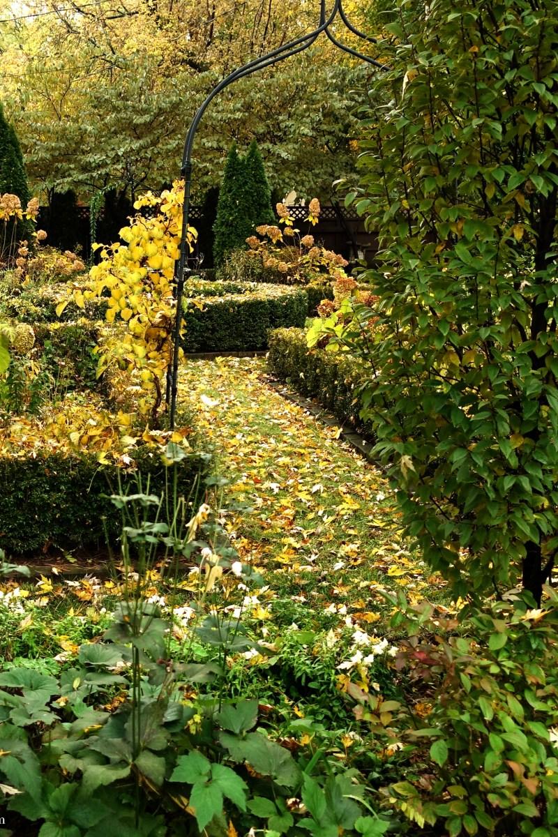 The November 2018 Garden