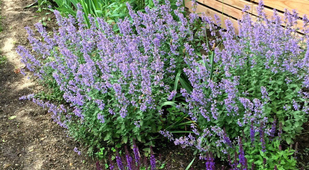 How To Create a Perennial Border from Scratch