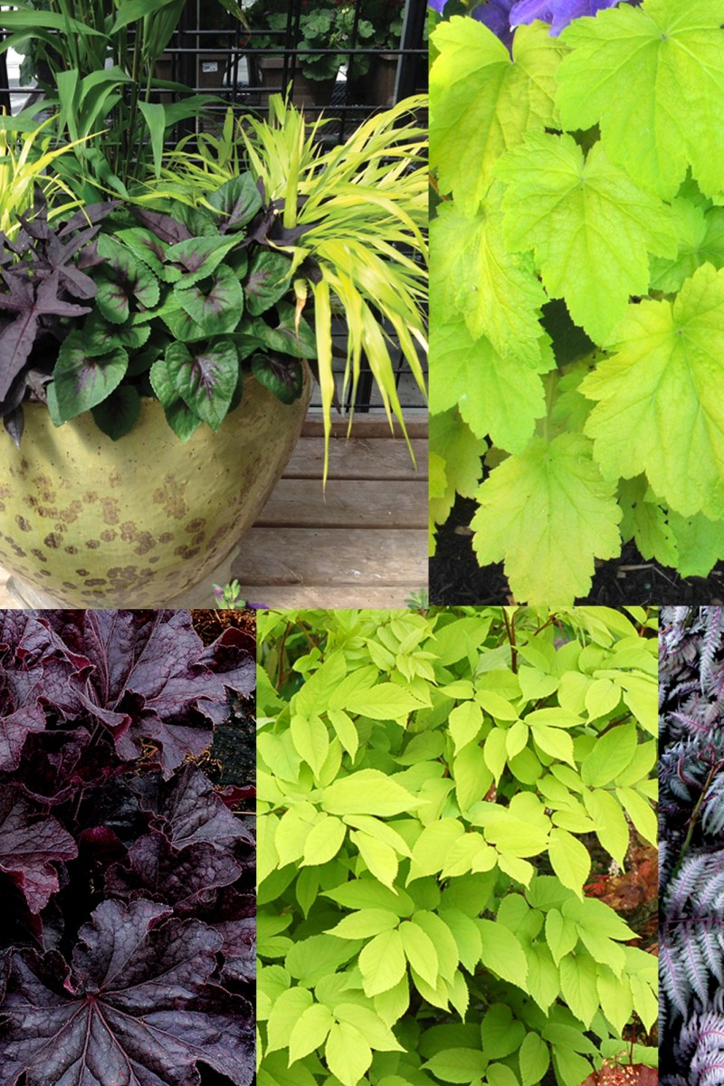 My 6 Favorite Shade Plants