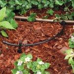 Rain Bird hose