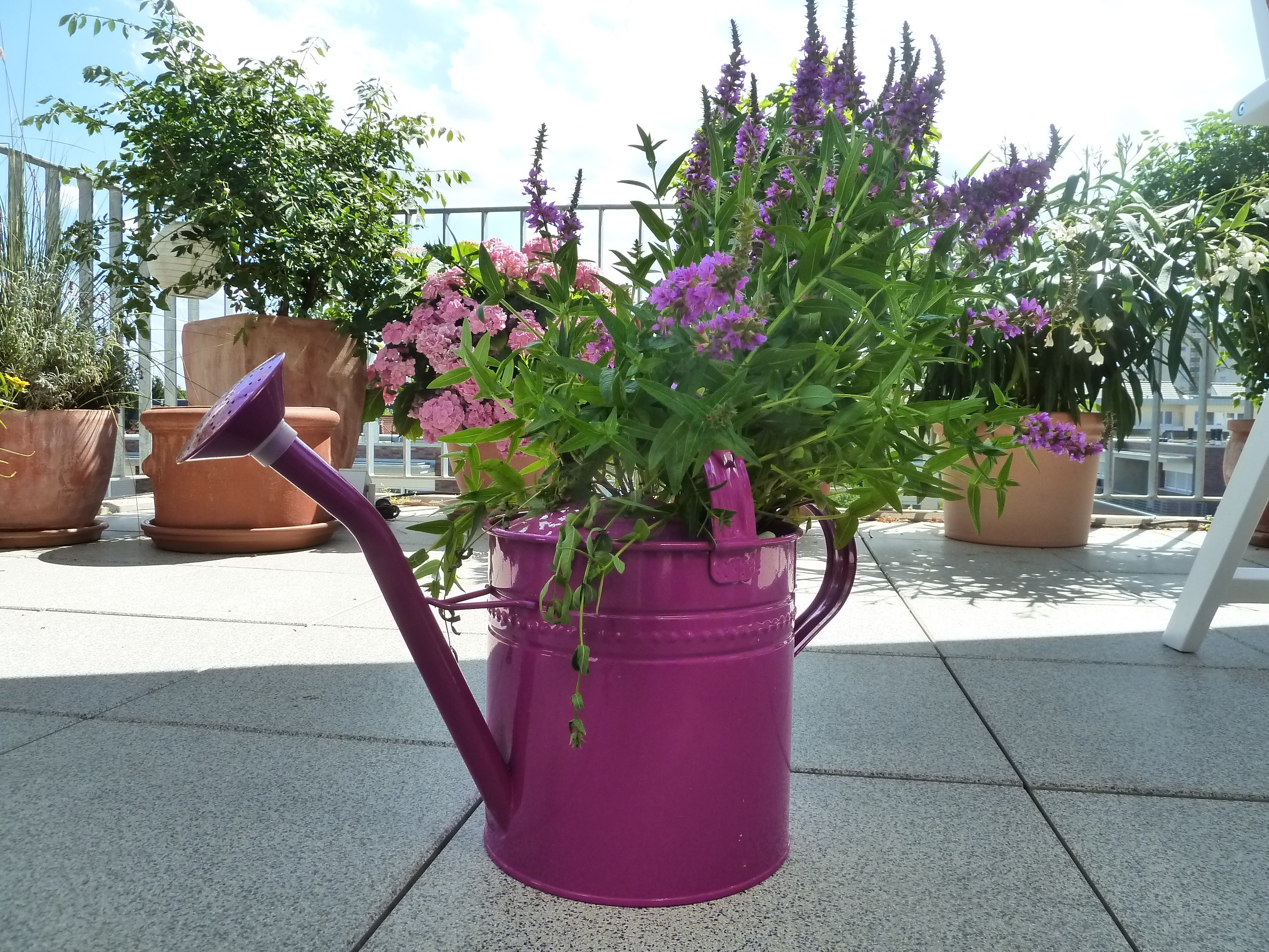 Garden Of Containers Container Gardening Blog