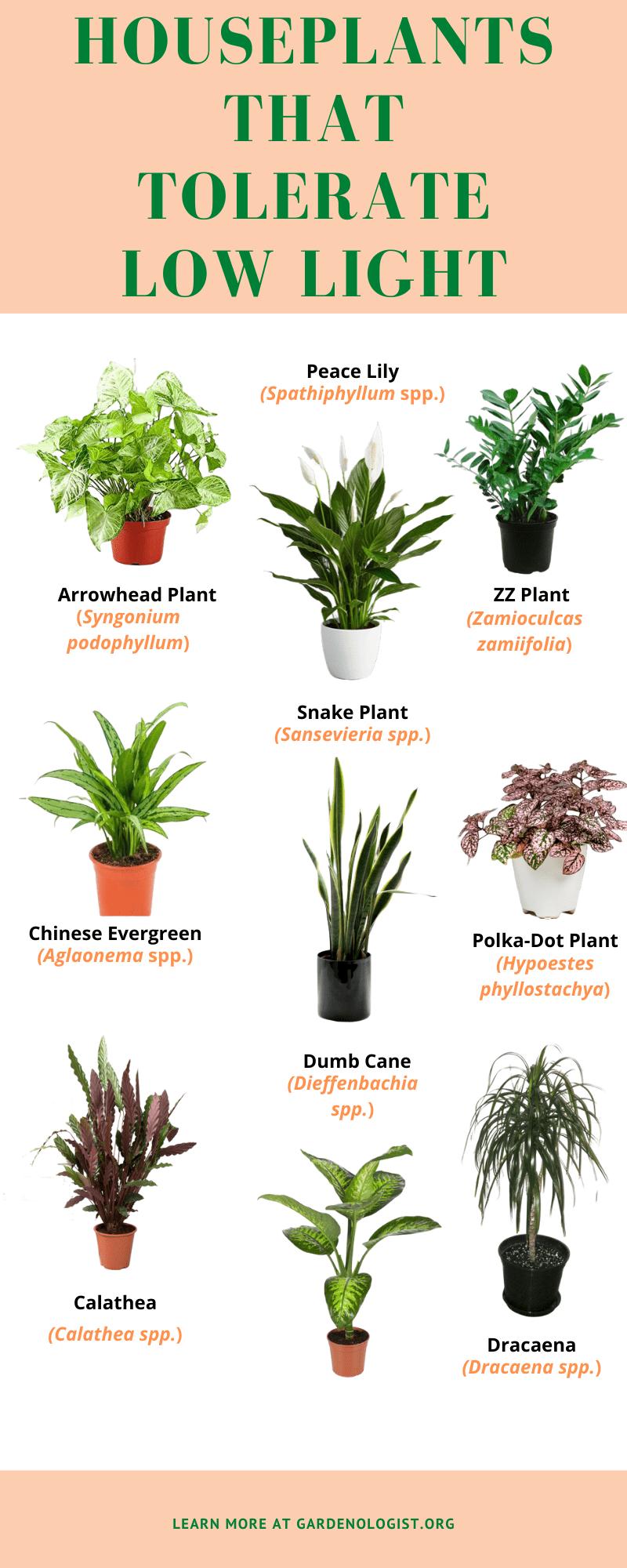 Low Light Indoor Plants Gardenologist