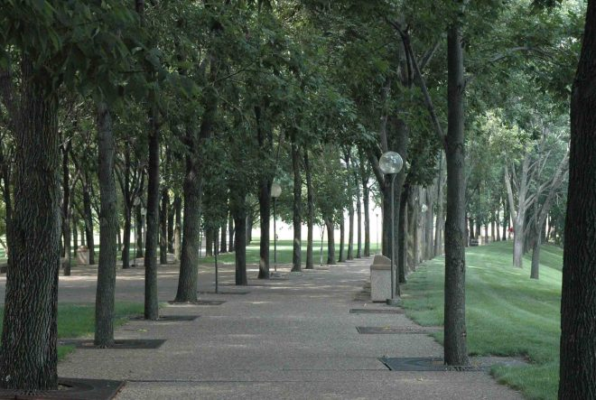 Over 500 'Rosehill' ash trees line the walkways at the Gateway National Monument