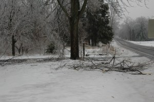 Our silver maple did what silver maples do in storm