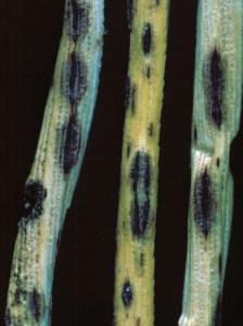 pathogen 2