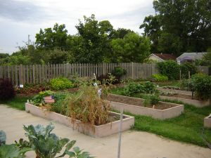 Raised beds with vegetables growing in them
