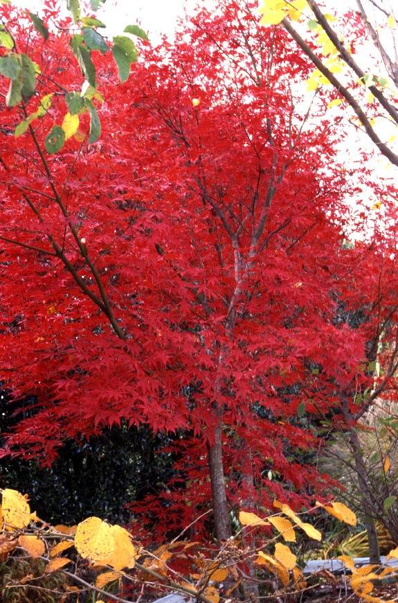 The Science Behind Fall Color The Garden Professors