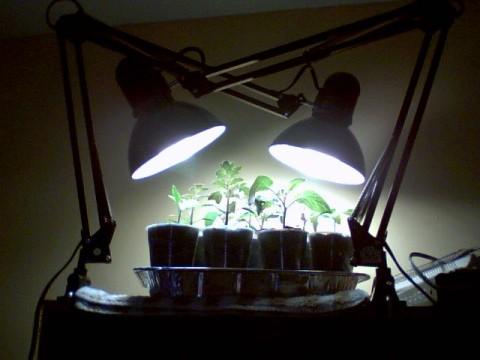 lamps et al