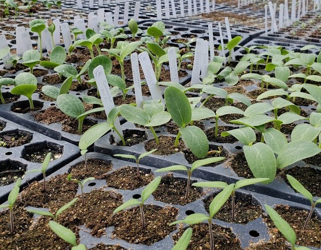 Feel the Heat: Temperature and Germination