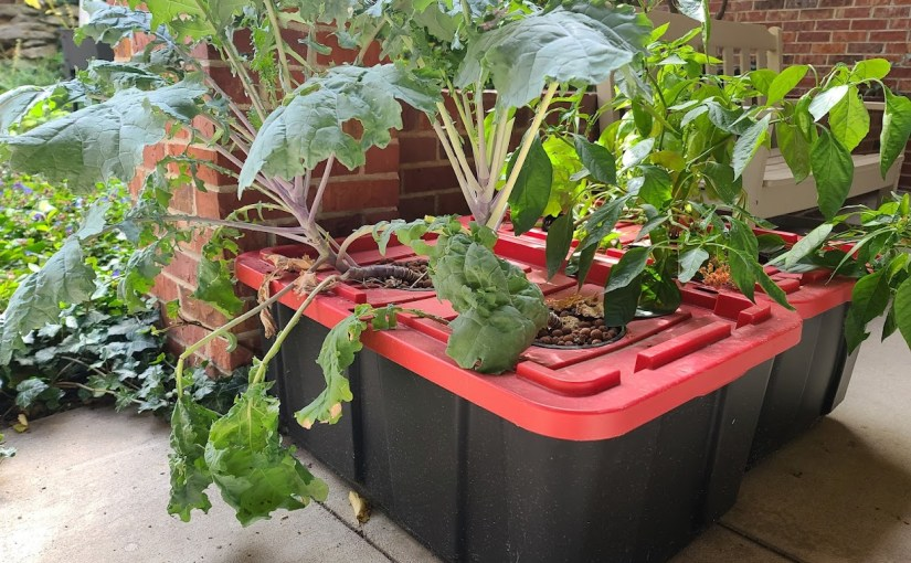 A Super Simple Salad in Stor(age): A DIY Home Hydroponics Example