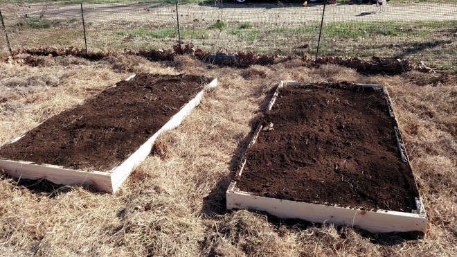 This image shows two raised garden beds with freshly added soil and surrounded by straw in a garden plot.