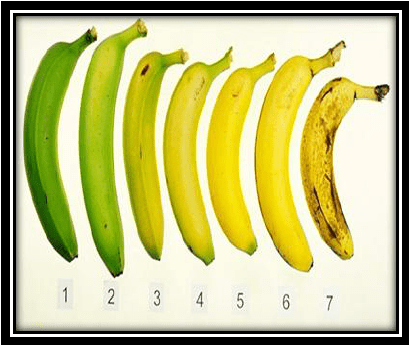 Ripe for the picking: Which fruits keep ripening after harvest?
