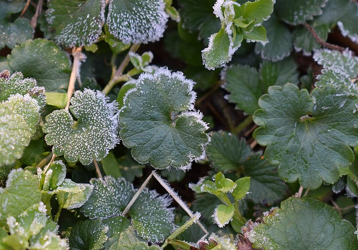 Planting Prognostication: Understanding last frost and planting dates