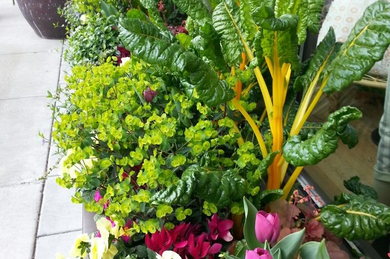 Contain Yourself: Vegetable gardening in containers and small spaces