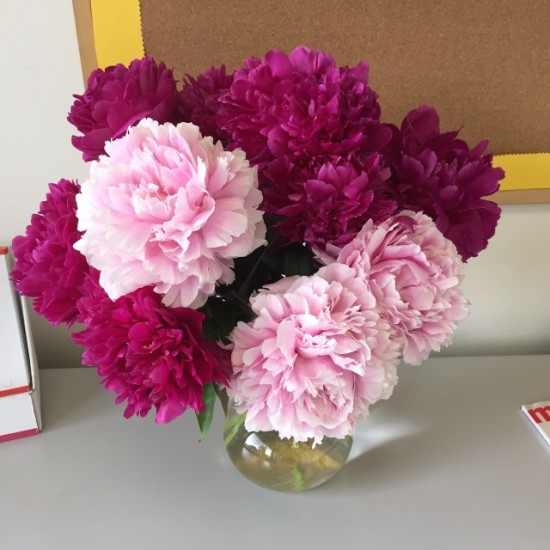 Peonies on May 26, 2015