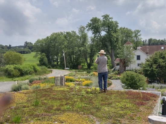 Ed Snodgrass on top of the barn green roof, looking down on the Island Bed. Mary Vaananen photo.