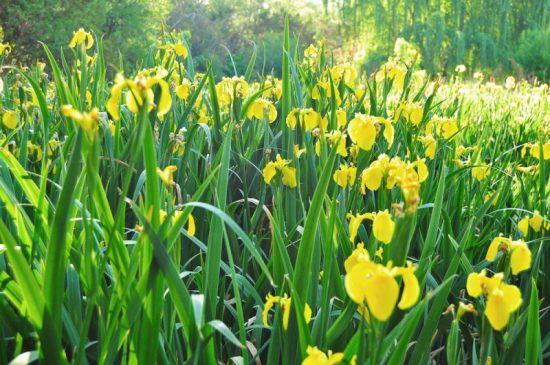 Iris image courtesy of Shutterstock