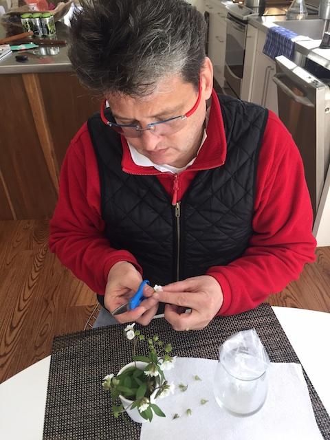 Collecting pollen. Salvisa, KY.