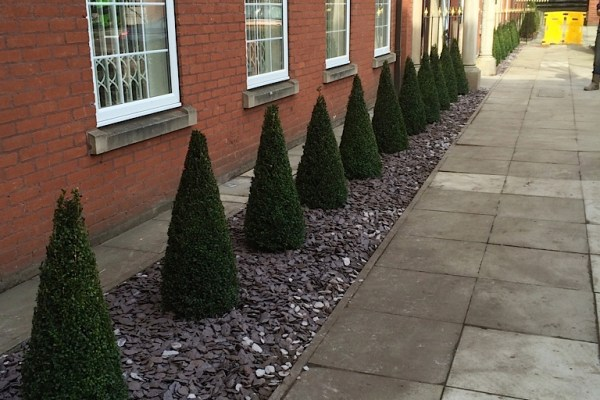 New hedge for the Professional Footballers' Association in Manchester