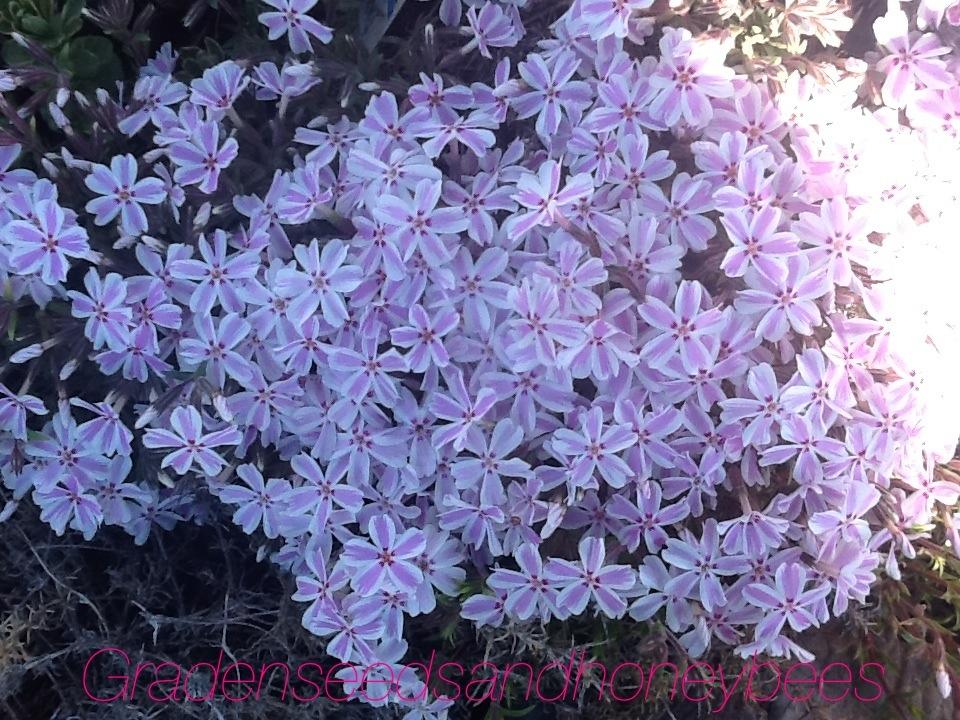 Flowers Perennials May Garden Garden Seeds And Honey Bees