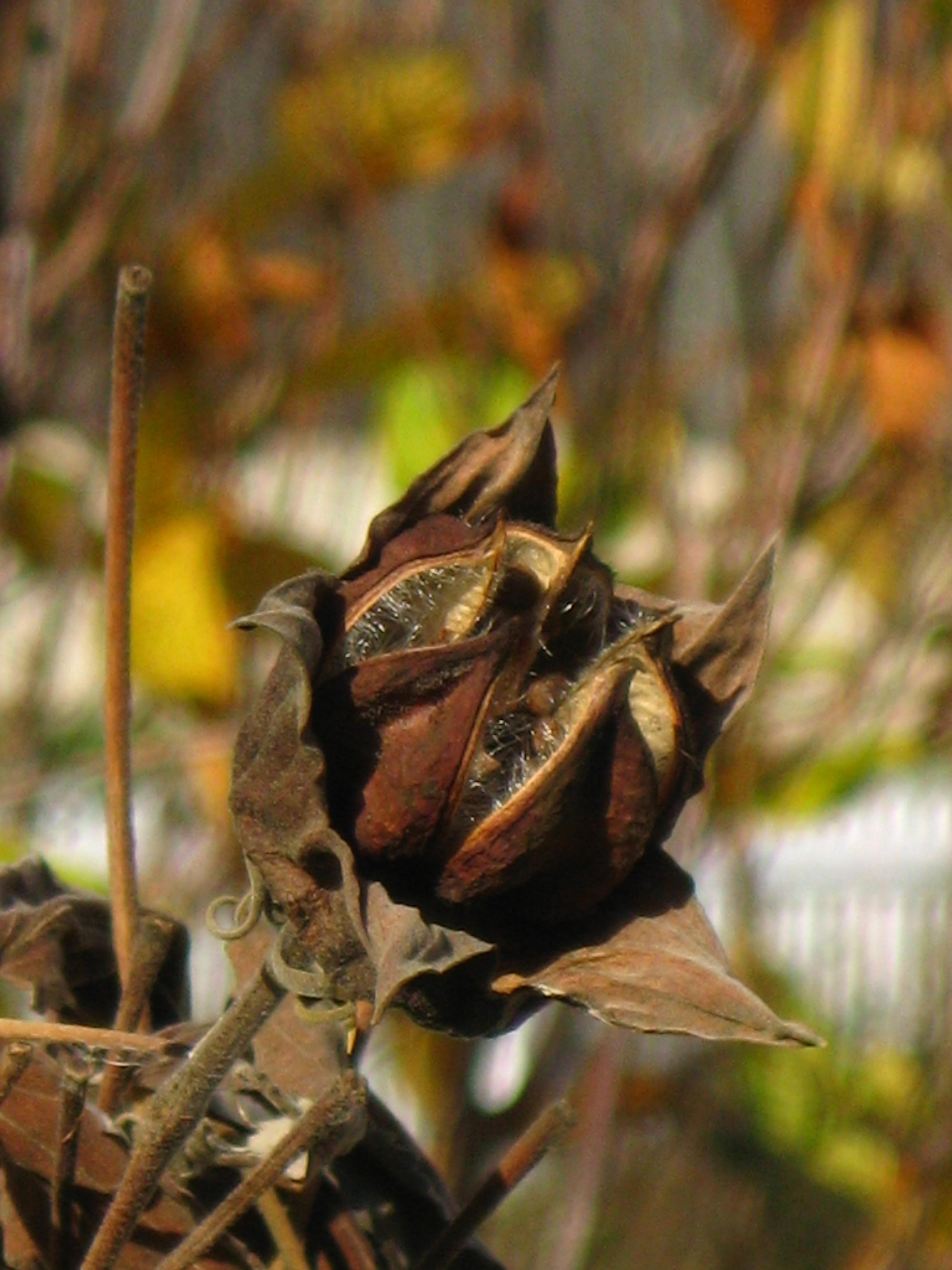 Faint Memories of My Garden | Gardens Eye View