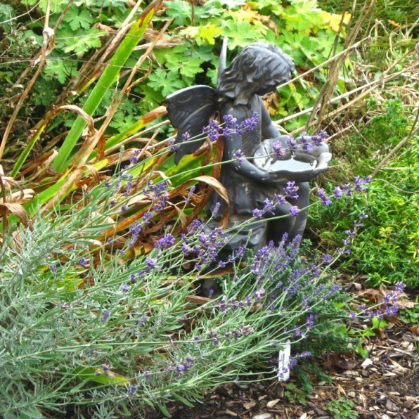 garden fairy with still blooming lavender
