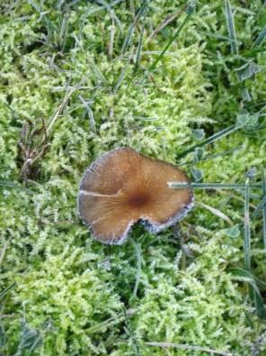 irish moss and mushroom