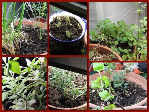 nov indoor herbs