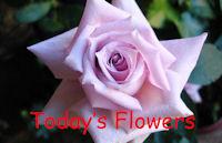 TODAY'S FLOWERS - NEW LOGO - Foto-1-Tratada-638x411px - SV