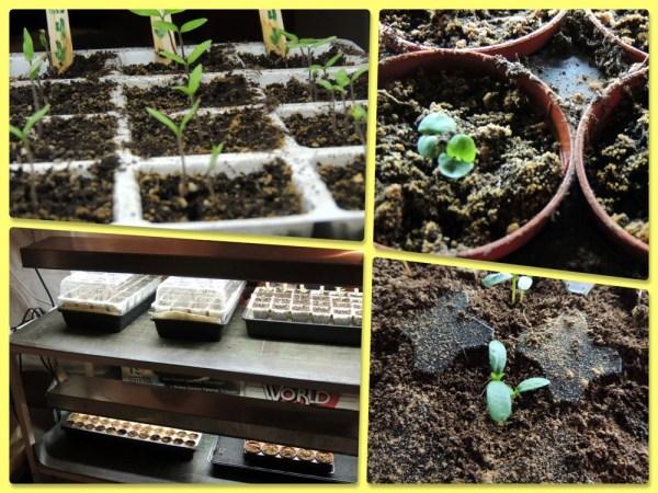 april seeds
