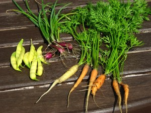 small harvest