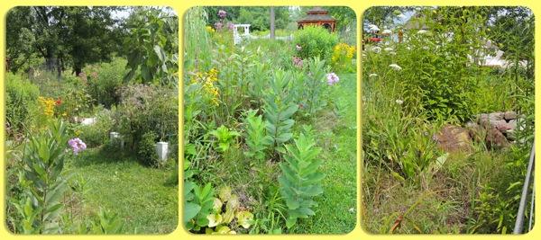 stuck ft garden2