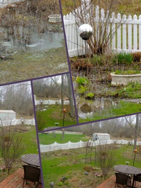 bog garden early spring