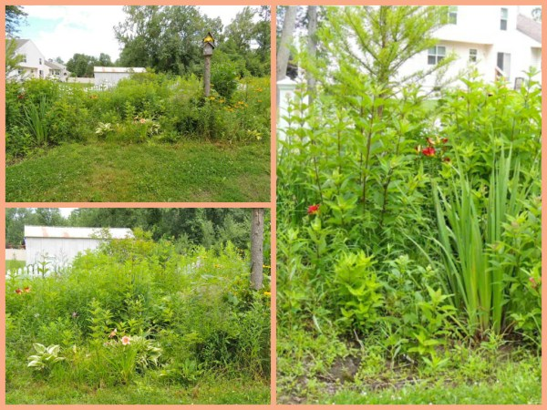 bog garden-summer