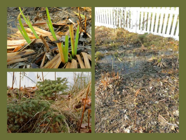near rain garden collage